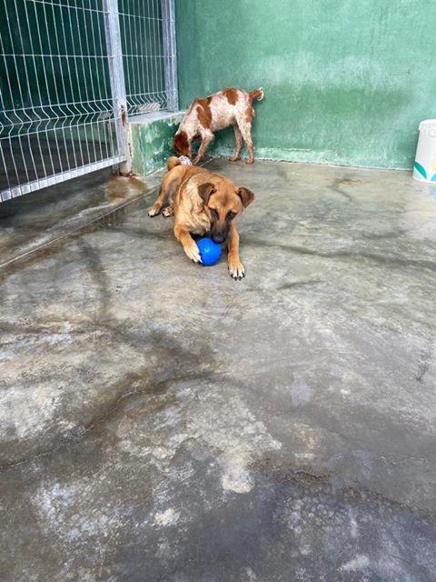 3 pallets voor Huellas con Esperanza 96390510
