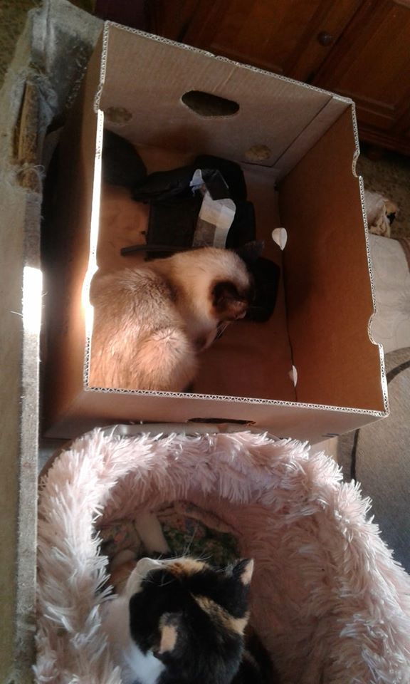 3 pallets voor Canis y Felis zijn aangekomen 96399510