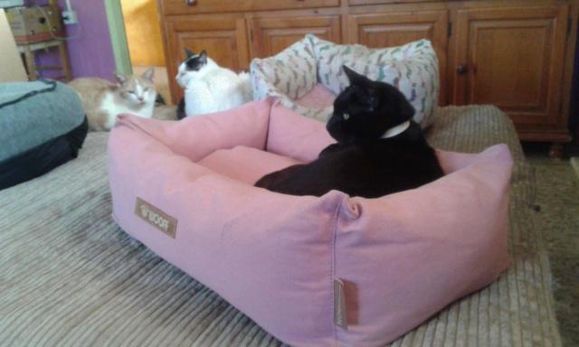 3 pallets voor Canis y Felis zijn aangekomen 96411810