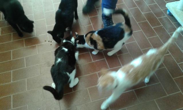 3 pallets voor Canis y Felis zijn aangekomen 96490010