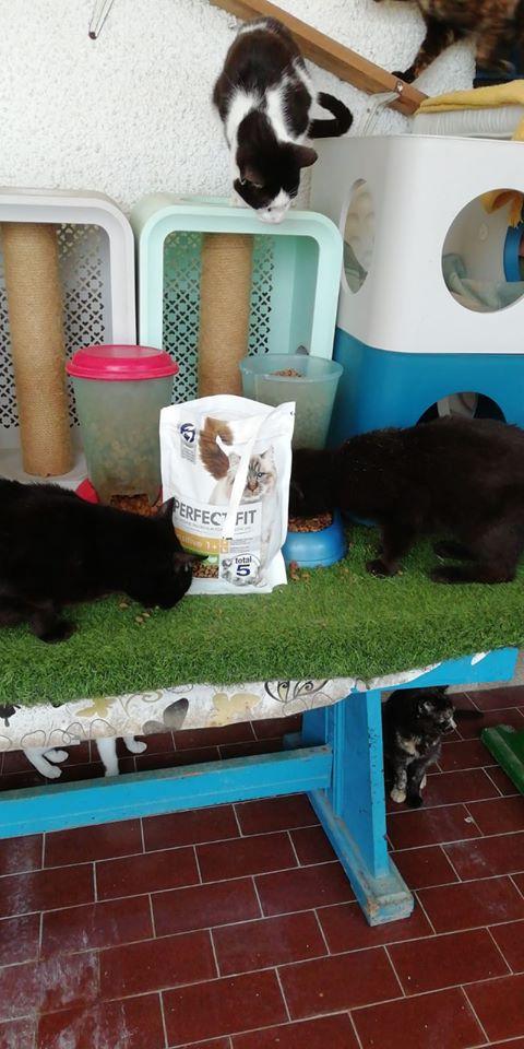 3 pallets voor Canis y Felis zijn aangekomen 96509411