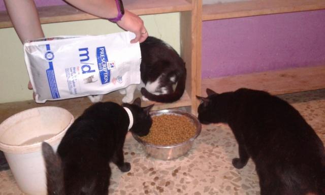 3 pallets voor Canis y Felis zijn aangekomen 96522610