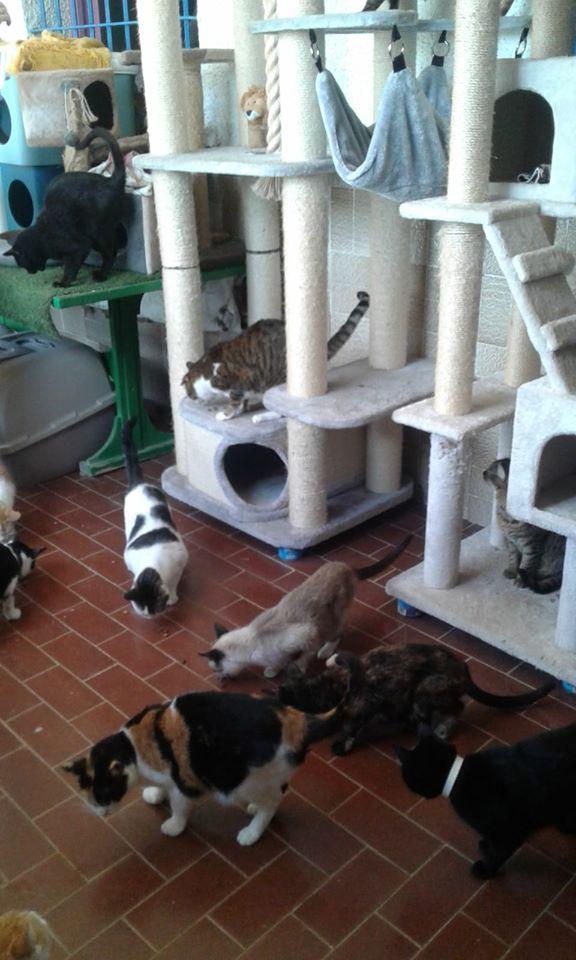 3 pallets voor Canis y Felis zijn aangekomen 96802610