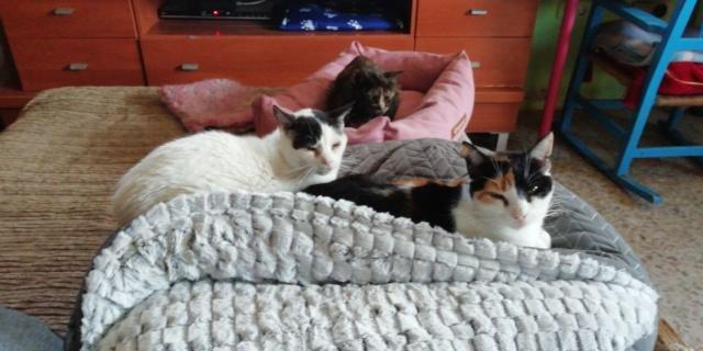3 pallets voor Canis y Felis zijn aangekomen 972bcc10