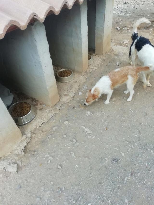2 pallets voor van Asociacion Refugio libertad animal te Malaga 99c97510