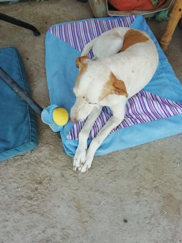 2 pallets voor van Asociacion Refugio libertad animal te Malaga 9d1ef010