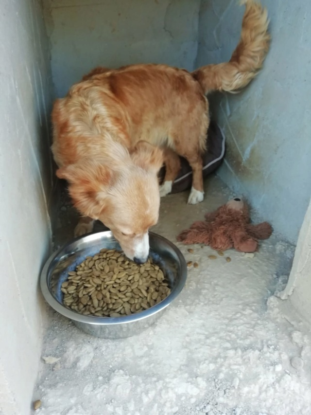 2 pallets voor van Asociacion Refugio libertad animal te Malaga A15f6410
