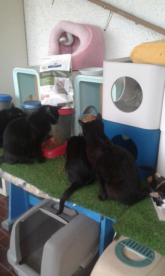 3 pallets voor Canis y Felis zijn aangekomen A9398610
