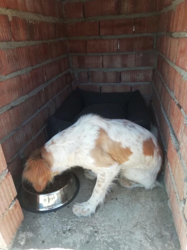 2 pallets voor van Asociacion Refugio libertad animal te Malaga Aac37810