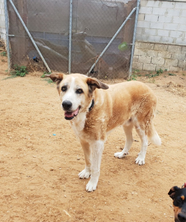 Canis Thor(Gedeeltelijke adoptie) B3e72d10