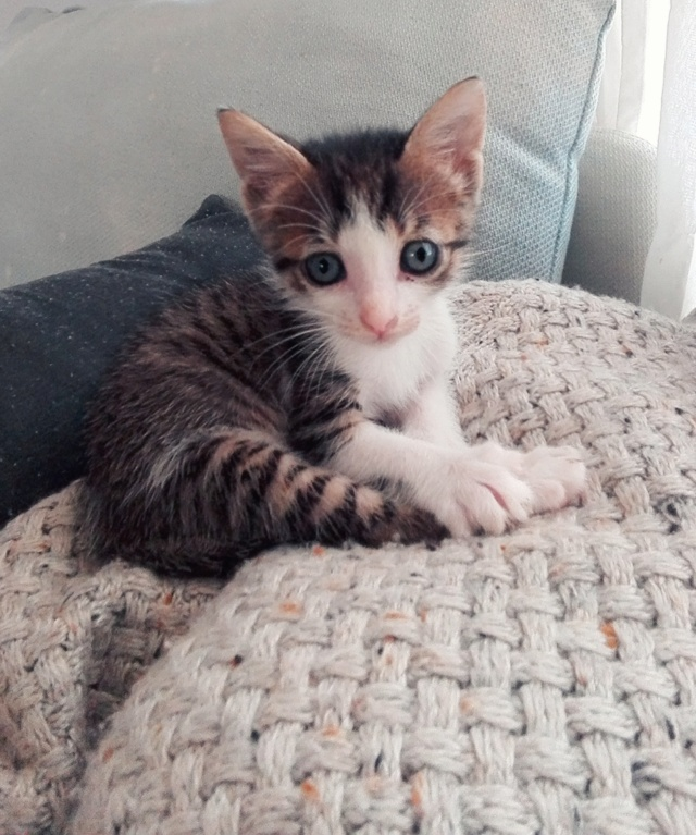 5 kittens Bbb8ab10