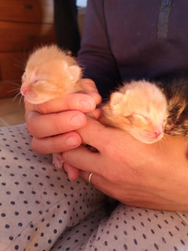Doos met 4 kittens in een veld achtergelaten D5fe0210