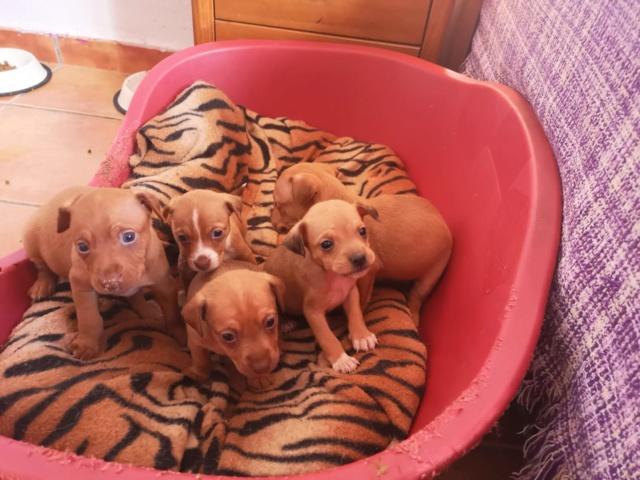 Voer voor de pups van Mijita Dbc86d10