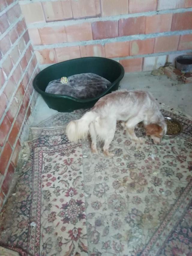 2 pallets voor van Asociacion Refugio libertad animal te Malaga E19de710