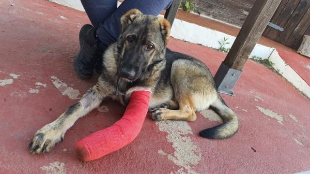 CA-  Togo - (gedeeltelijke adoptie) E9362310