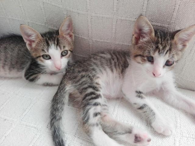 5 kittens Ecab0a10