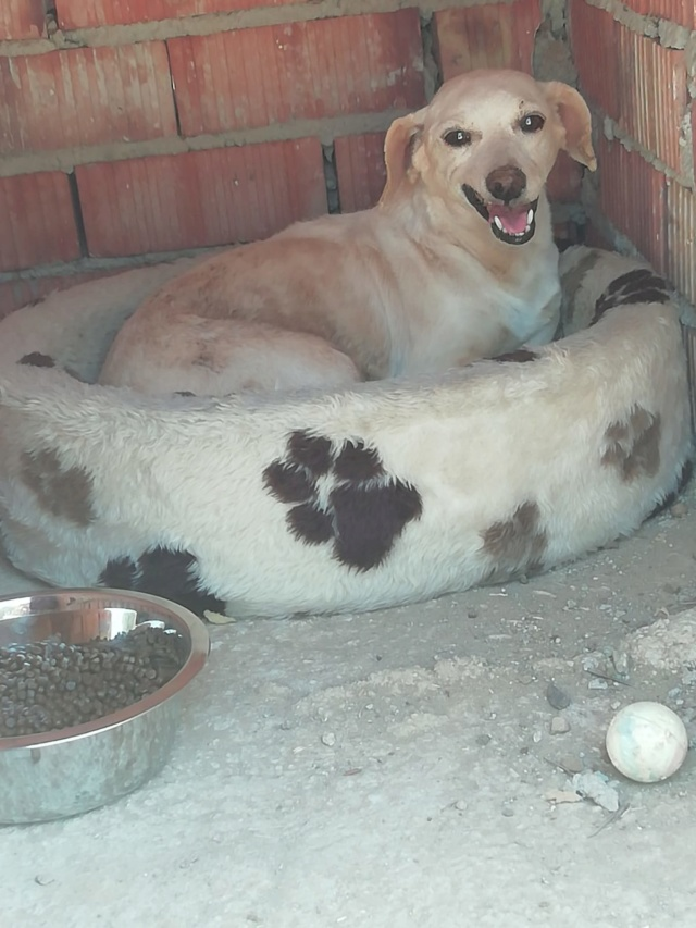 2 pallets voor van Asociacion Refugio libertad animal te Malaga F051d410