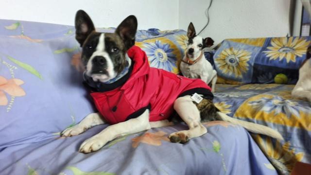 3 pallets voor Canis y Felis zijn aangekomen F69a3610