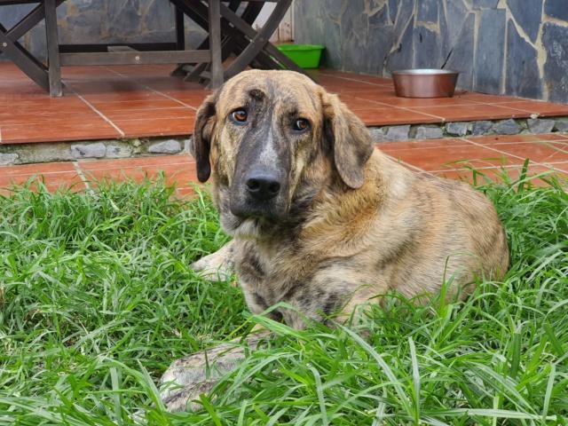 CA Nana (Gedeeltelijke adoptie) Ff292b10