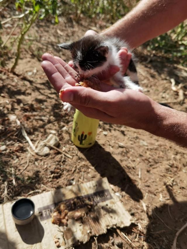 Kleine kitten (Paolo) gevonden Kitten10