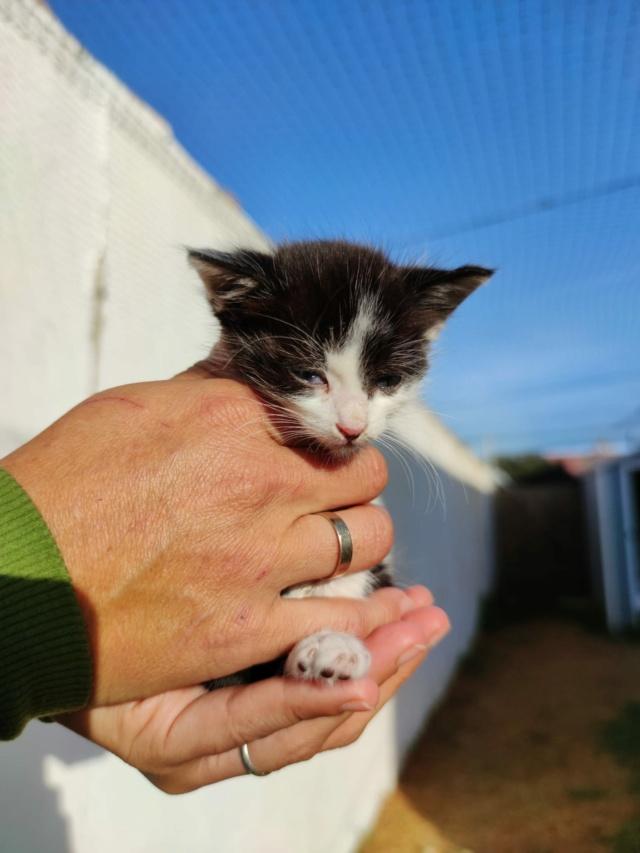 Kleine kitten (Paolo) gevonden Kitten13
