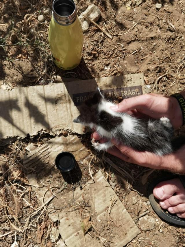 Kleine kitten (Paolo) gevonden Kitten15