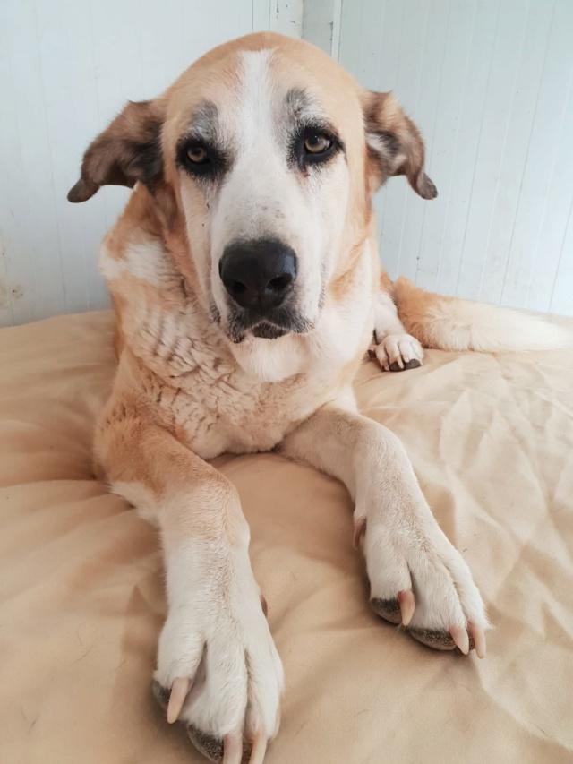 Canis Thor(Gedeeltelijke adoptie) Thor10
