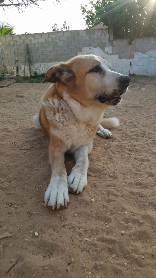 Canis Thor(Gedeeltelijke adoptie) Thor111