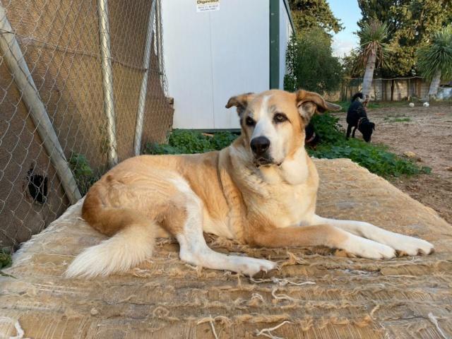 Canis Thor(Gedeeltelijke adoptie) Thor112