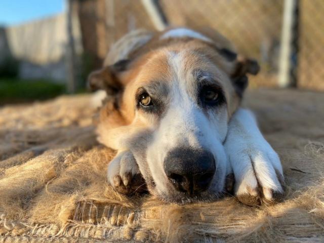 Canis Thor(Gedeeltelijke adoptie) Thor12