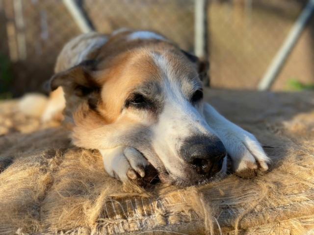 Canis Thor(Gedeeltelijke adoptie) Thor211