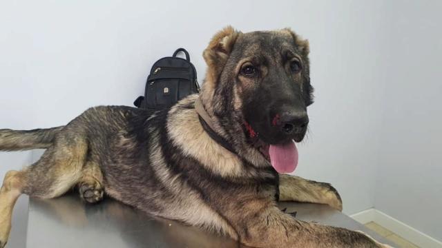 CA-  Togo - (gedeeltelijke adoptie) Togo710