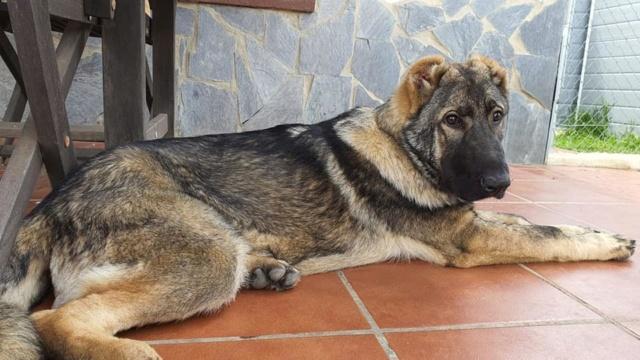CA-  Togo - (gedeeltelijke adoptie) Togo_110