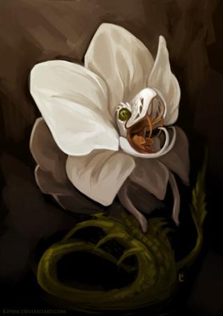 Celestial Spirit Magic: God of the Celestial Spirit Realm Form Orchid11
