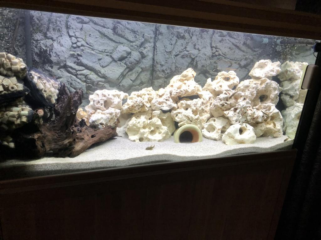 Placement filtre dans aquarium Img_3110