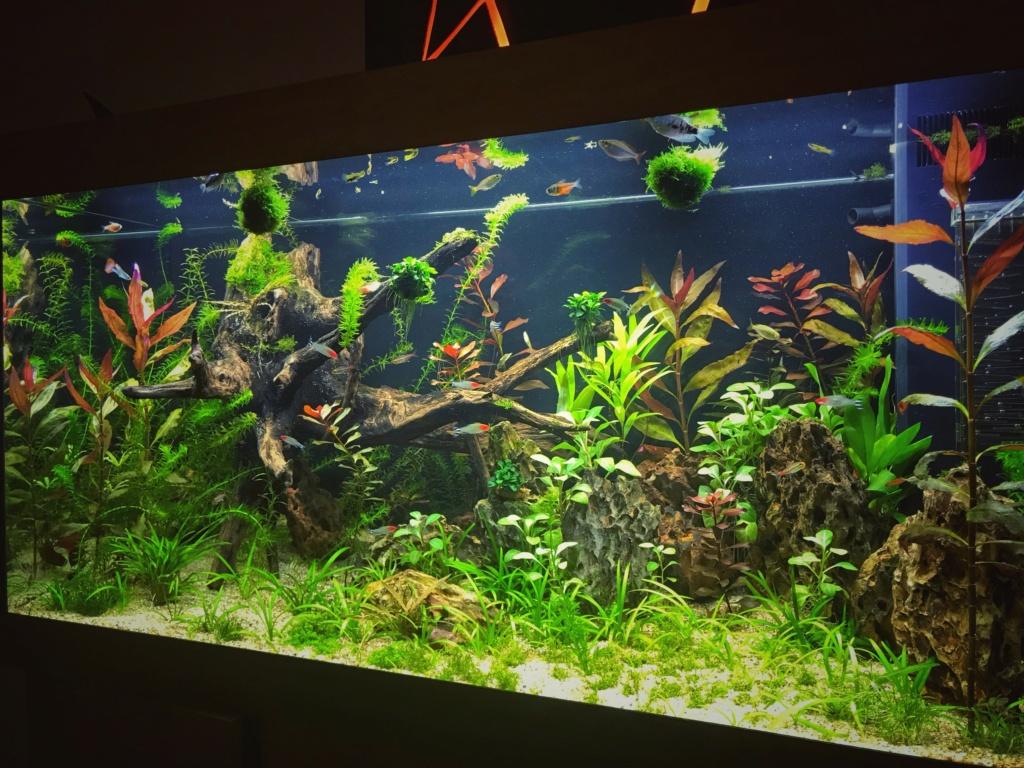 Aquarium en cour  Aqua10
