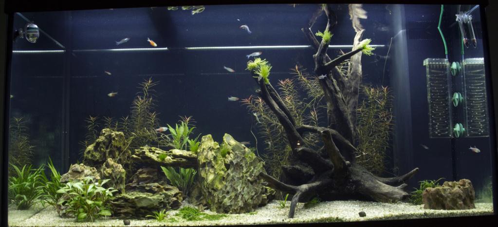 Aquarium en cour  Aqua_211