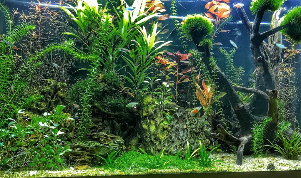 Aquarium en cour  Aquaaa10