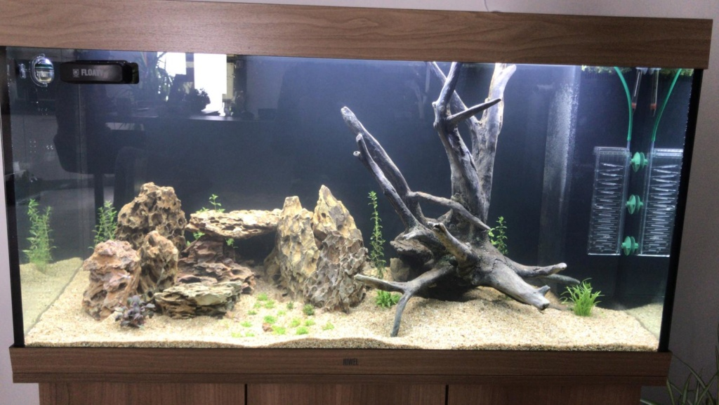 Aquarium en cour  Whatsa11