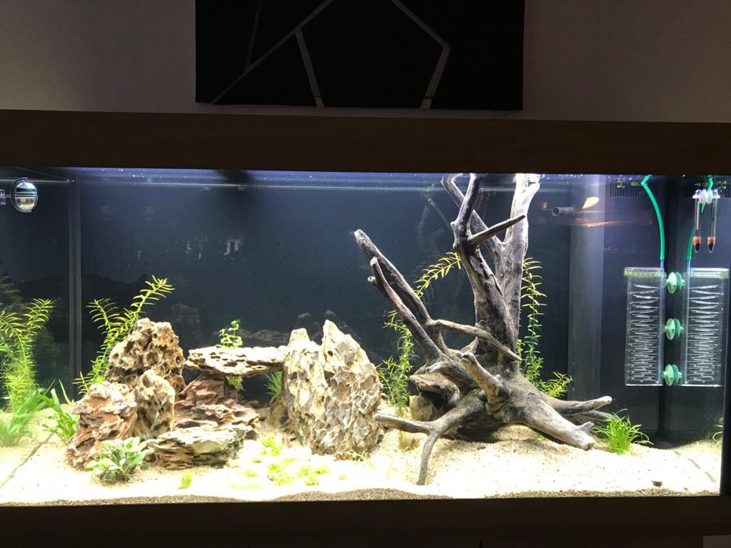 Aquarium en cour  Whatsa12