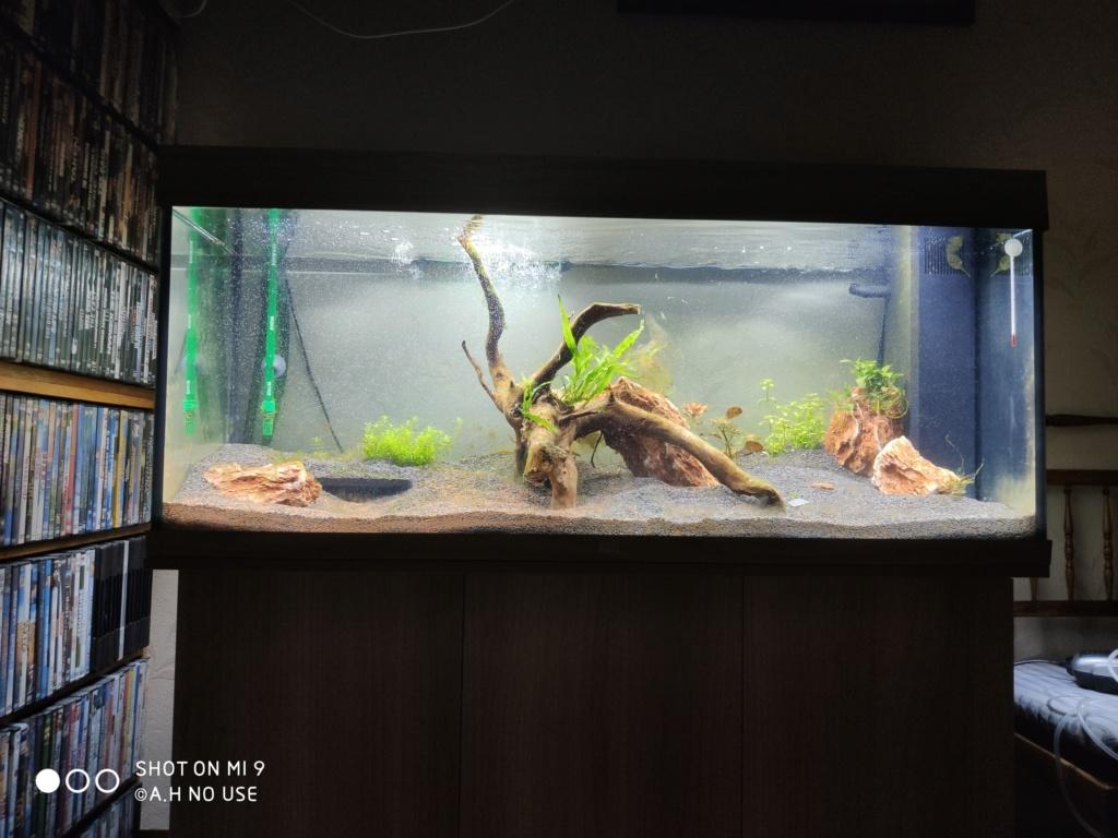 Aquarium 240 litres suivi - Page 14 Img_2021
