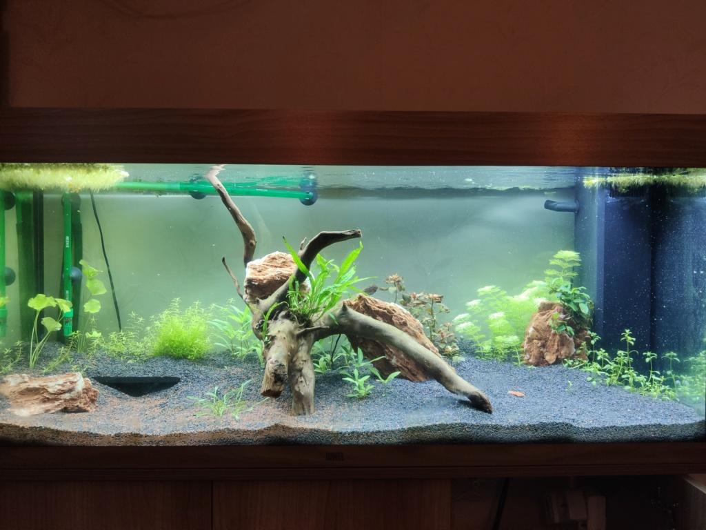 Aquarium 240 litres suivi - Page 14 Img_2022