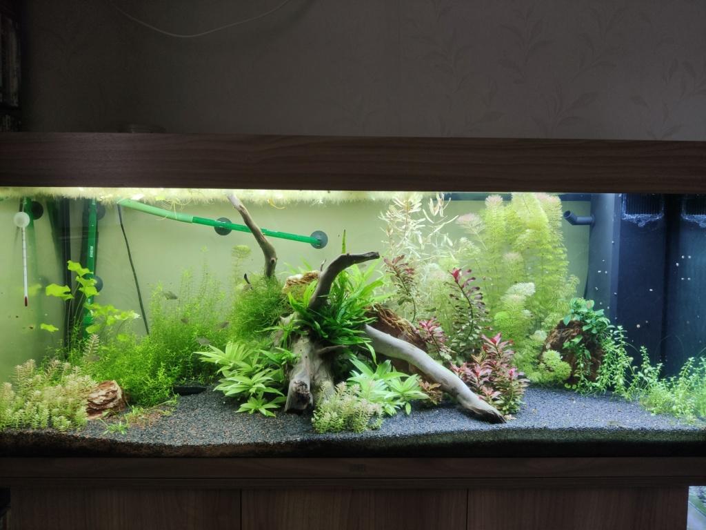 Aquarium 240 litres suivi - Page 14 Img_2024