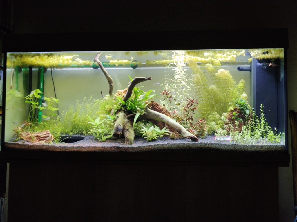 Aquarium 240 litres suivi - Page 14 Img_2025