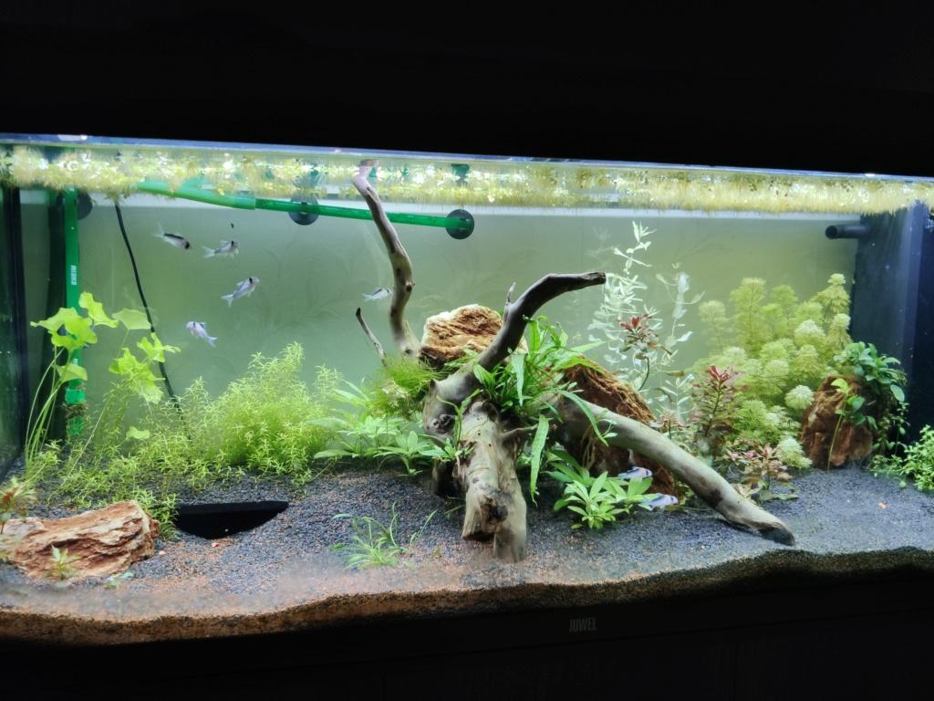 Aquarium 240 litres suivi - Page 14 Img_2026