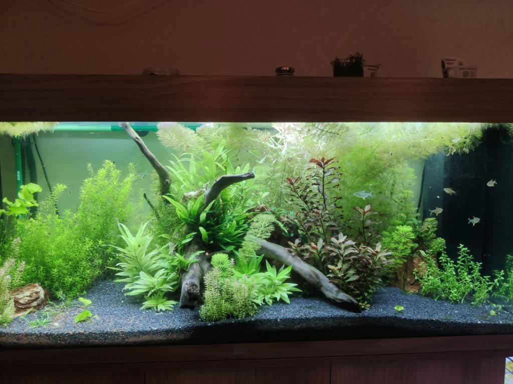 Aquarium 240 litres suivi - Page 14 Img_2027