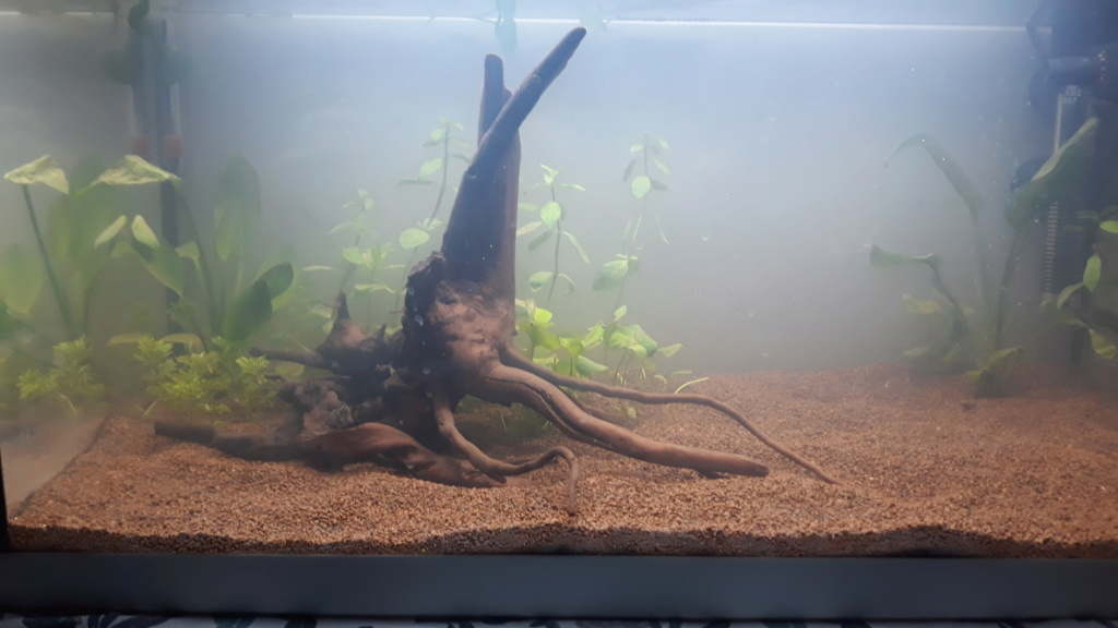 Projet d'aquarium 60l 20200611