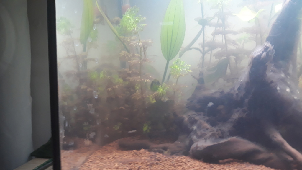 Projet d'aquarium 60l - Page 2 20200618