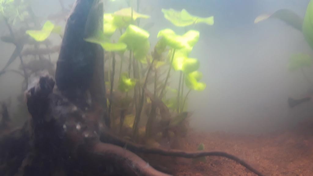 Projet d'aquarium 60l - Page 2 20200620