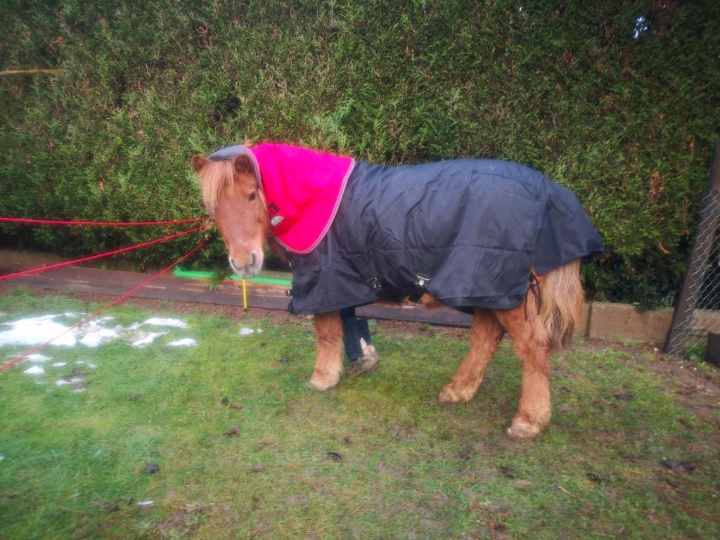 CARAMEL – Ponette ONC typée Shetland née en 1999 - Reste chez sa propriétaire Img_2019